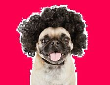 "PetCo Bootique""Disco Wig""S/M Dog Costume Black Curly CAT Halloween Small Medium"