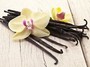 Genuine Madagascar Bourbon vanilla-One Rooted Plant Ready To Grow