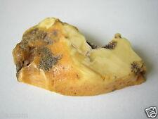 Butterscotch Roh Bernstein 4,1 g / 4,0 x 2,6 x 0,8 cm Raw Butterscotch Amber