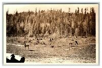 Vintage Early 1900's Roadside Dear and Clear Cut Trees on Forest Edge UNPOSTED