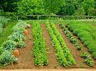 25 TYPE Emergency Seed Bank Non Hybrid Seeds Survival NON GMO Heirloom GARDEN
