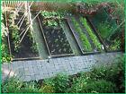 Survival Seed Emergency Bank Organic Food Vegetable Non GMO Hybrid Heirloom 2018