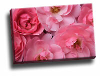 Bonica Roses Giclee Canvas Wall Art Picture