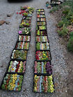 SUCCULENTS - 50 different succulent cuttings plus 50 pots to get you started