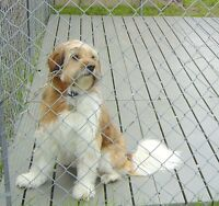 Kennel Deck dog kennel plastic outdoor dog pen floor KD 100($35.75 each)