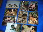 LOT cpa 9 CARTE POSTALE les oiseaux de notre pays TETRAO pigeons BERNACHE buse