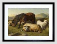 PAINTING ANIMAL GOAT SHEEP PONY HORSE ANSDELL FRAMED ART PRINT MOUNT B12X12765
