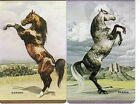 2 (pair) single vintage playing swap cards Horse Horses - b/back Named