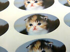 Gattino Ovale Sigillare Etichette,Gatto Adesivi per Fascia,Buste,Sacchetti,Carte