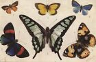 CARTE POSTALE ILLUSTRATEUR TUCK / R.J WEATTHY ANIMAUX PAPILLONS