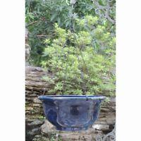 Austram Seine Hanging Basket Planter