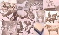 HORSE YrOwn~508p CARE TRAINING shoeing breeding veterinary~saddle stable design+