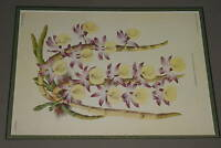 Lindenia Dendrobium Primulinum Limited Edition Print Orchid Club Collectable B5