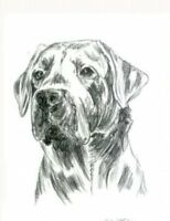 Dog Dogs Hund Hunde Tier Tiere Labrador