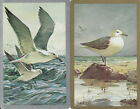 Vintage Swap/Playing Cards - 2 SINGLE- ARTIST SIGNED SEAGULLS