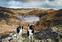 Steven Townsend OUR VALLEY Border Collies Pastoral Dogs