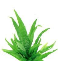 Java Fern - for fish tank algae eater flowerhorn BT