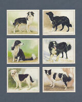 IMPERIAL  PUBLISHING  LTD.  -  SET  OF  L 6  BORDER  COLLIES  DOG  CARDS