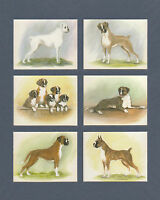 IMPERIAL  PUBLISHING  LTD.  -  SET  OF  L 6  BOXERS  DOG  CARDS