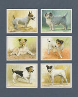 IMPERIAL  PUBLISHING  LTD.  -  SET  OF  L 6  JACK  RUSSELL  TERRIERS  DOG  CARDS