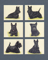 IMPERIAL  PUBLISHING  LTD.  -  SET  OF  L 6  SCOTTISH  TERRIERS  DOG  CARDS