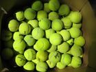 100 MIXED Tennis Balls WILSON PENN DUNLOP Dog Toy LOT