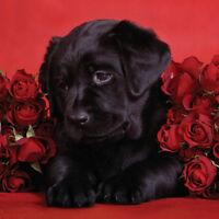 Valentine's Day Blank Card Husband Wife Boyfriend Girlfriend Partner Red Roses!