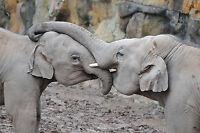 Baby Elephants POSTCARD Zoo Animal Photo Steve Greaves Wildlife Art Card Nature