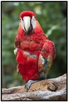 RED MACAW PARROT ( ZOO COLLECTION ) FUN  FRIDGE MAGNET - BRAND NEW
