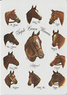 TWO PLAYING SWAP CARD SECRETARIAT and 10 THOROUGHBRED HORSE TRIPLE CROWN WINNERS