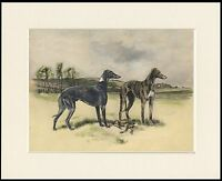 GREYHOUND DOGS LOVELY DOG PRINT MOUNTED READY TO FRAME
