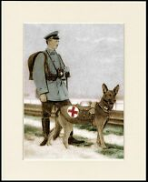 GERMAN SHEPHERD RED CROSS WAR DOG LOVELY LITTLE PRINT