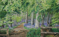 """Coton Bluebells"" Limited Edition Print"