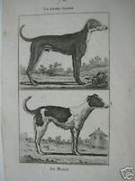 Hund Chien Wachhund Jagdhund Hofhund Danois Buffon Histoire naturelle 1798