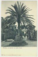 CPA 06 Alpes-Maritimes Menton Un Palmier du Jardin Public