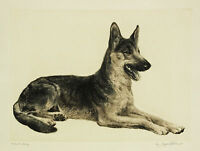 GERMAN SHEPHERD DOG ALSATIAN FINE ART PRINT ENGRAVING 4