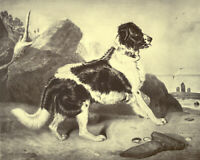 """NEWFOUNDLAND SIR EDWIN LANDSEER DOG ART PRINT """"ENGRAVING"""" - """"Off to the Rescue"""""""