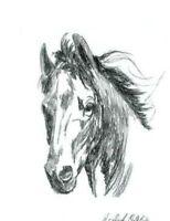 Pferd Pferde Horse Horses Tier Tiere