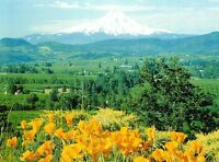 (10135) Postcard - Cascades Volcanoes - Mount Hood, Oregon
