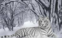 Tiger white in snow forest Beautiful QUALITY CANVAS ART PRINT A4 Poster cat