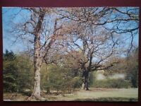 POSTCARD ESSEX EPPING FOREST