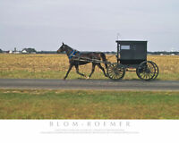 Animal-Amish Horse and Buggy-Color Fine Art Photo-8x10-COA-SIGNED!