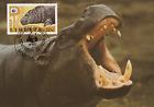 Pygmy Hippopotamus / Hippo Stamp & Maxi Card / Postcard WWF FDC Liberia Africa