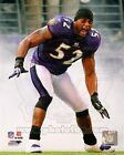"""Ray Lewis Baltimore Ravens NFL Action Photo AAKY172 (Size: 8"""" x 10"""")"""
