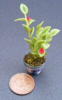1:12 Scale Green Plant With A Red Flower + Pot Dolls House Miniature Garden G11
