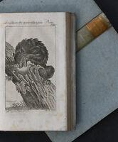 HERRN VON BUFFONS NATURGESCHICHTE,20.BAND,KUPFER,1795,PAULI / BERLIN