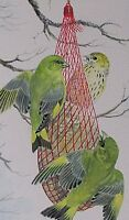 Frances Fry Watercolour Painting Greenfinches (Birds) Eating From A Feeding Net