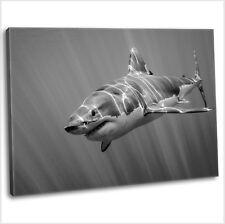 Great White Shark Framed Canvas Print Animal Wall Art Picture Black & White