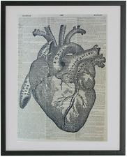 Anatomy Heart Print No.260, heart poster, anatomy art, human heart