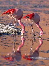 86648 NATURE BIRD FLAMINGO REFLECT WATER PINK HOME Decor WALL PRINT POSTER CA